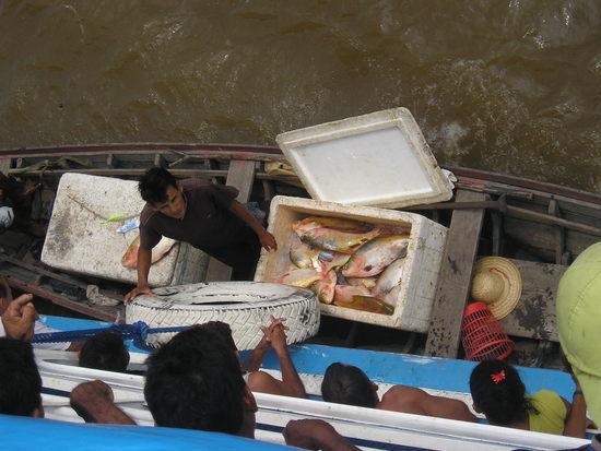 Amazon Boat - Anyone for fish? 1