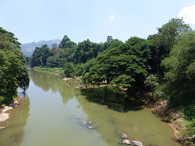 Peradeniya Botanical Gardens - view from bridge