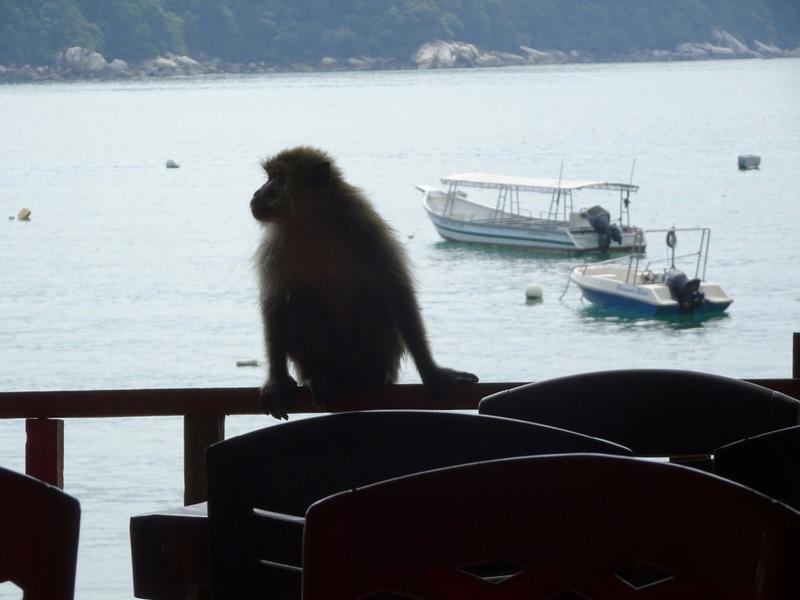 Monkey in restaurant!