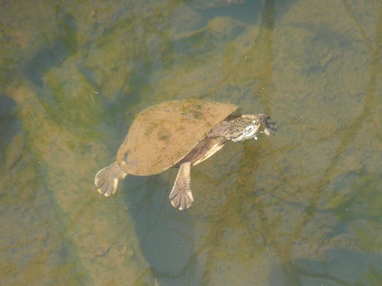 Iguazu Argentina Wildlife 3