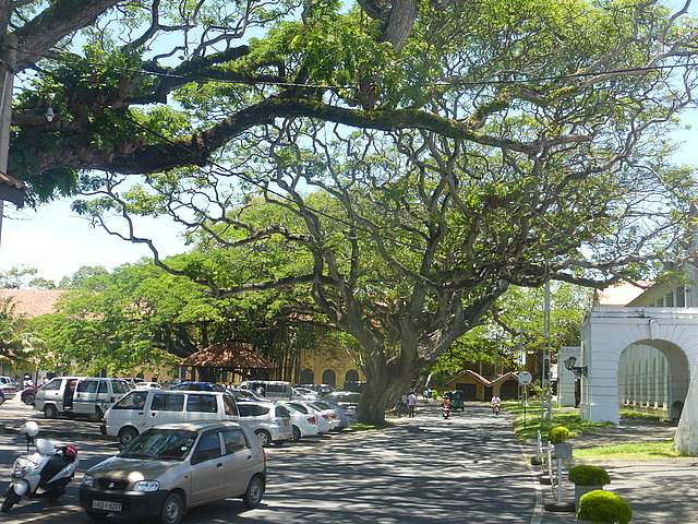 Galle Fort - trees in Court Square