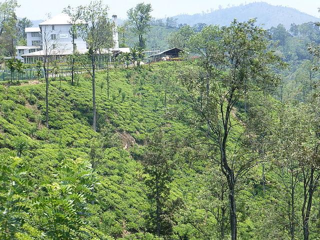 Newburgh Tea Plantation and factory