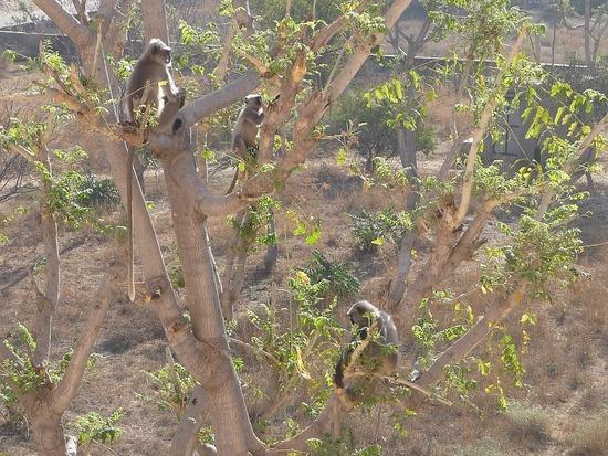 Views from bedroom - Monkeys in tree opposite
