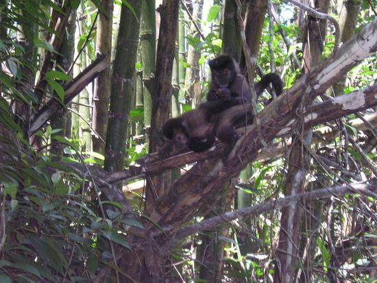 Iguazu Argentina EcoTrip Cappuchin Monkeys 2