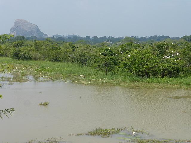 Yala scenery 5