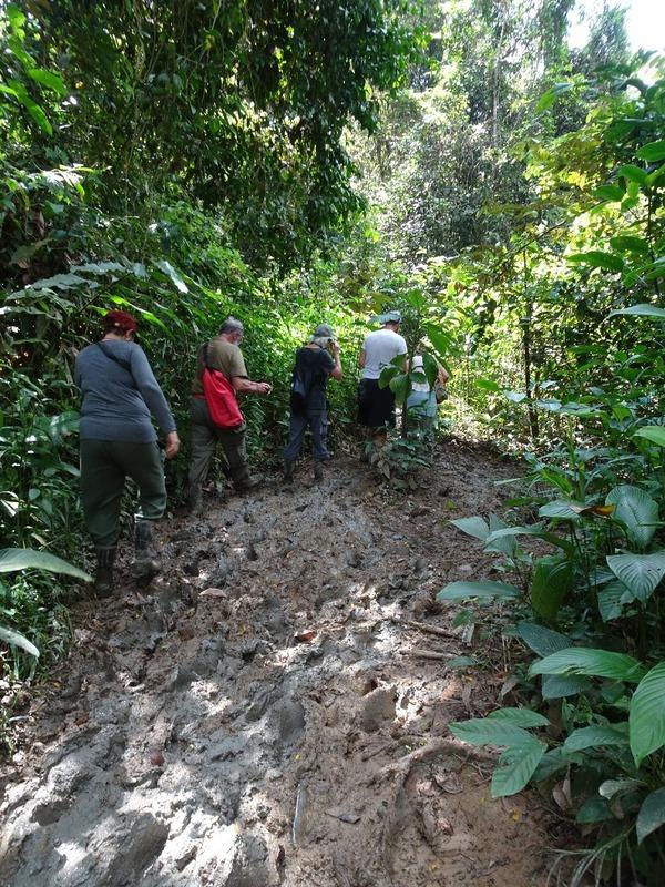 Walk ... in mud!