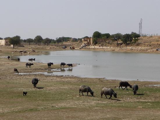 Around jaisalner - Gadi Sagar Lake 2