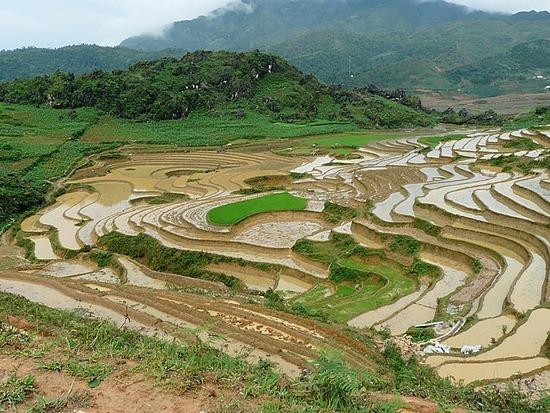 Ta Phin Trek - Rice terraces 3