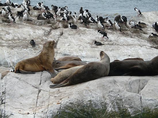 Day 4 - Beagle Channel Trip - Cormorants Sea Lions