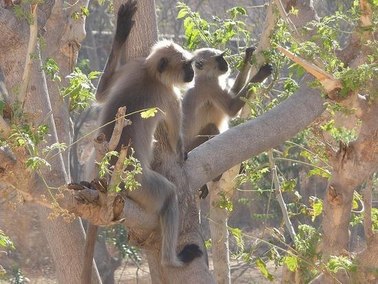 Views from bedroom - Monkeys in tree opposite 2