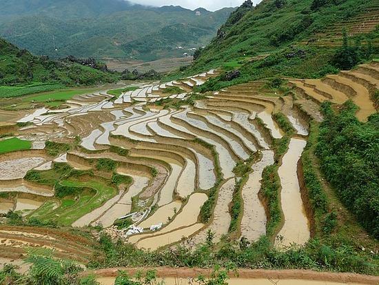 Ta Phin Trek - Rice terraces 4
