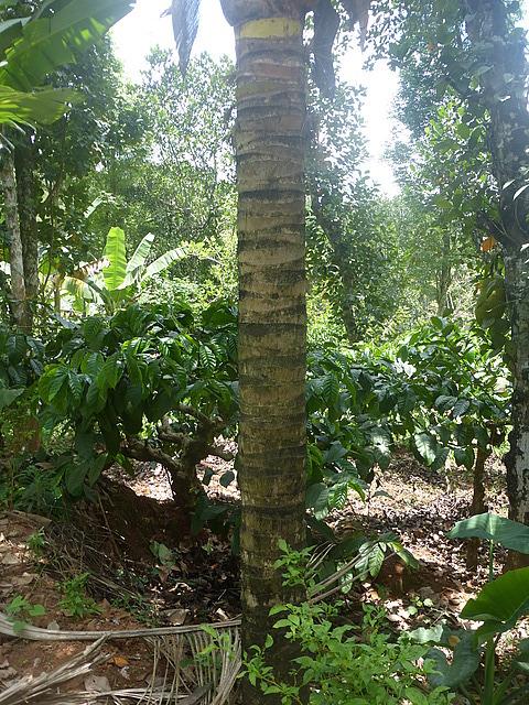 Day trip - Coffee plantation