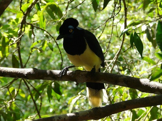 Iguazu Argentina Wildlife 1