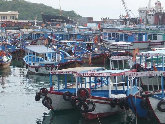 Boat Trip - Harbour
