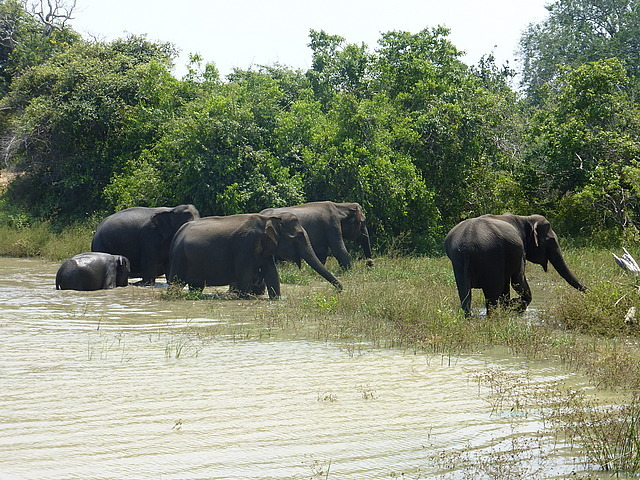 Elephants at waterhole - 9