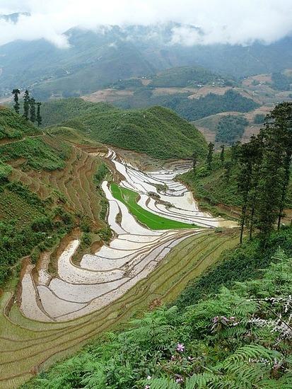 Ta Van trek - Rice terraces