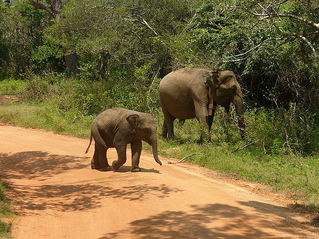 Female and young elephant