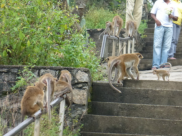 Way up to Dambulla - careful with the monkeys!