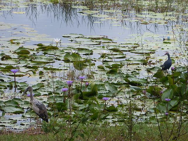 Day trip - Birds on lake