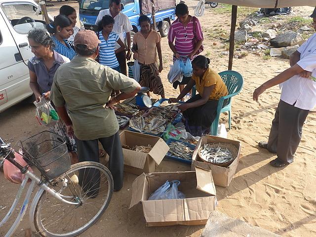 dry fish sales