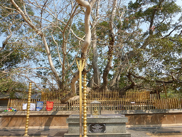 Kataragama - Maha Devale small Buddha and Bo tree