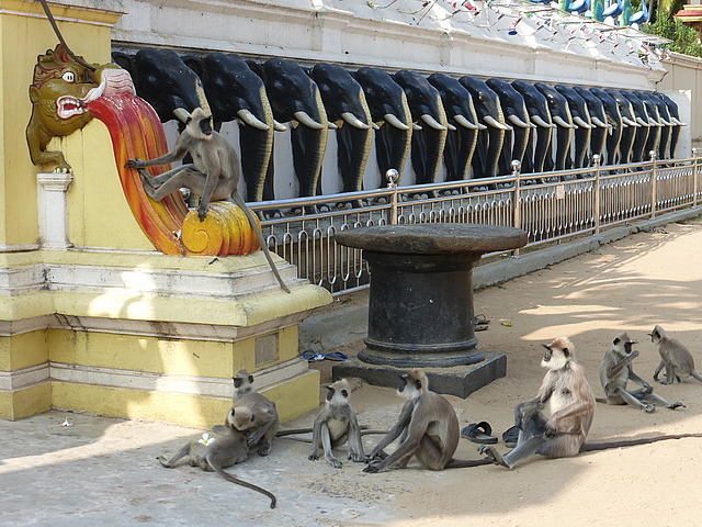 Kataragama - overrun with Lemur monkyes ...