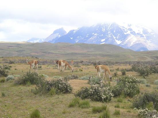 Torres del Paine trip - Guacanos