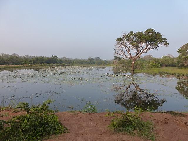 Yala scenery 4