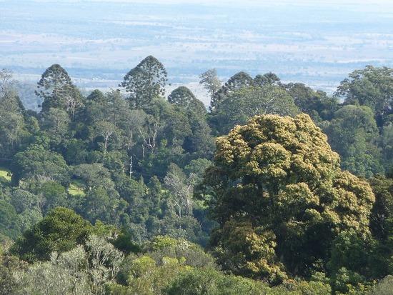 Bunyas Trip - view from Bunya mountains
