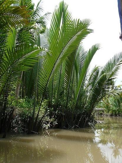 Mekong Waterways near My Tho 2