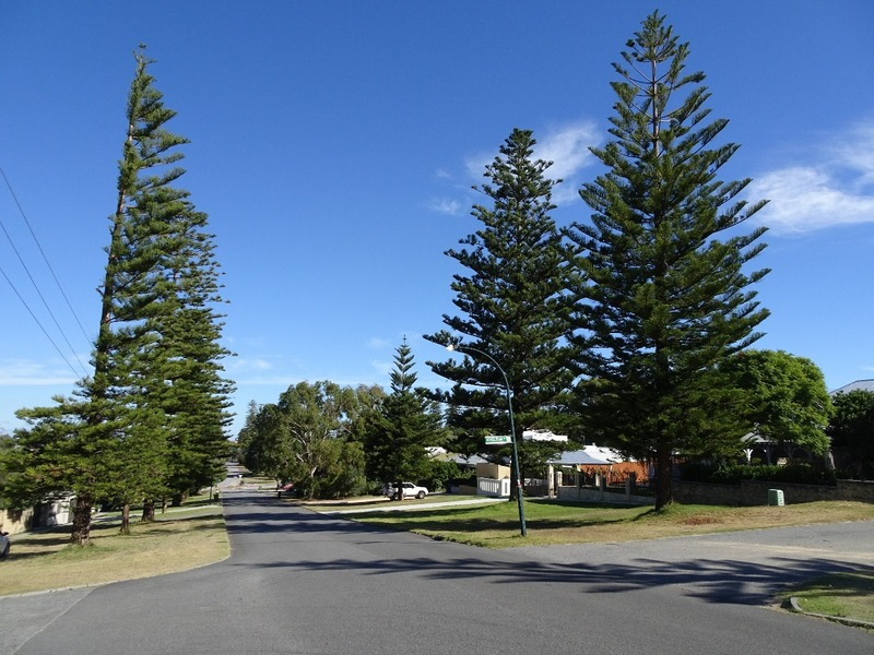 Cottesloe - crossroads and Norfolk pines