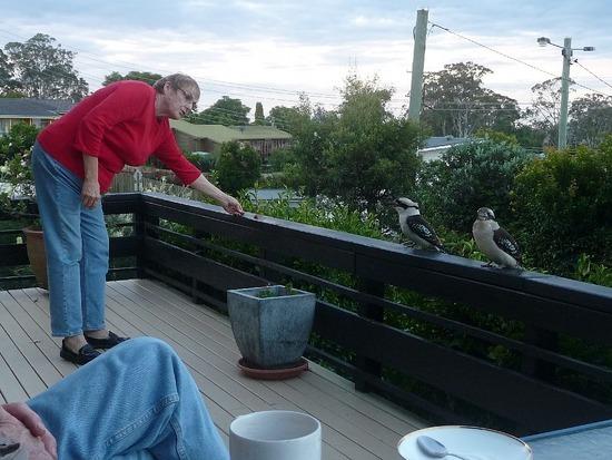 Kookaburras love raw steak!