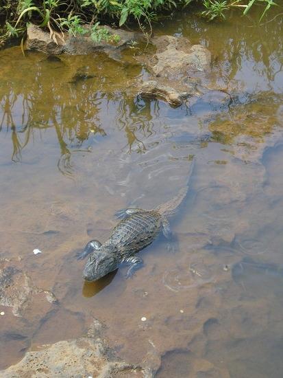 Iguazu Argentina Wildlife 2