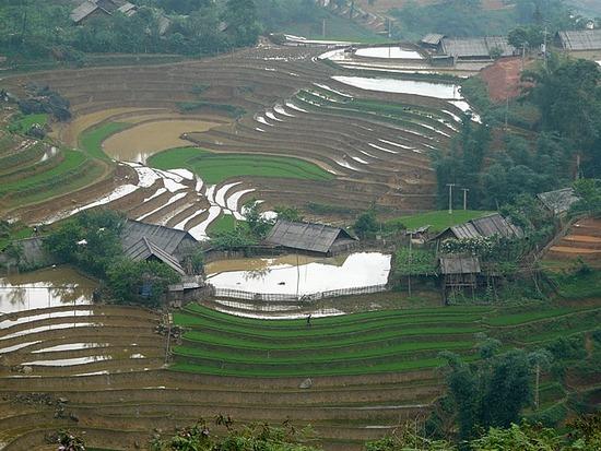 Ta Van trek - Rice terraces again