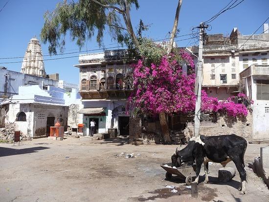 Around Pushkar Town 8