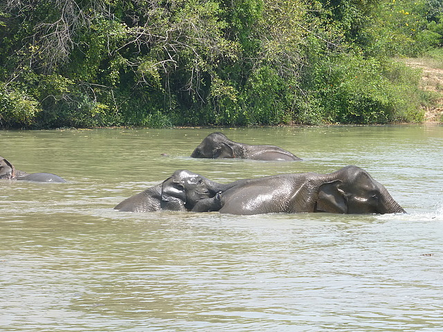 Elephants at waterhole - 5