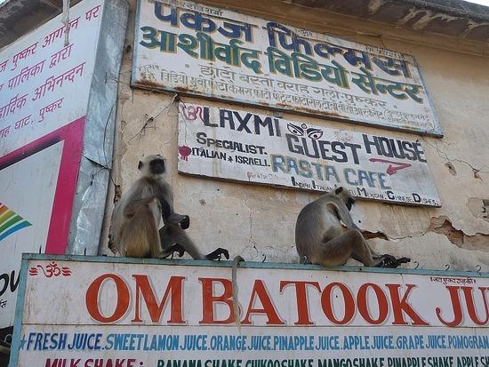 Around Pushkar Town 7