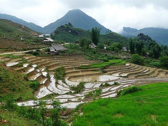 Ta Phin Trek - Rice terraces 1
