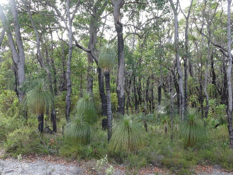 Return journey - Grass trees