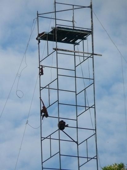 Mamiraua Wildlife - Howler Monkeys up tower!