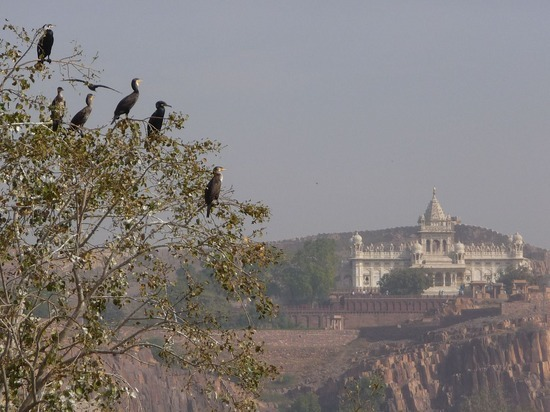 Hotel Pal Haveli - view from roof