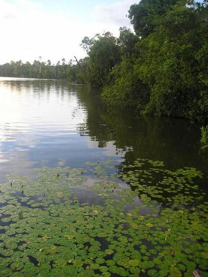 Quistococha Lake Trip 1