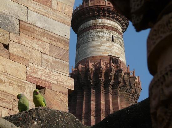 Sights - Qutb Minar plus Parakeets