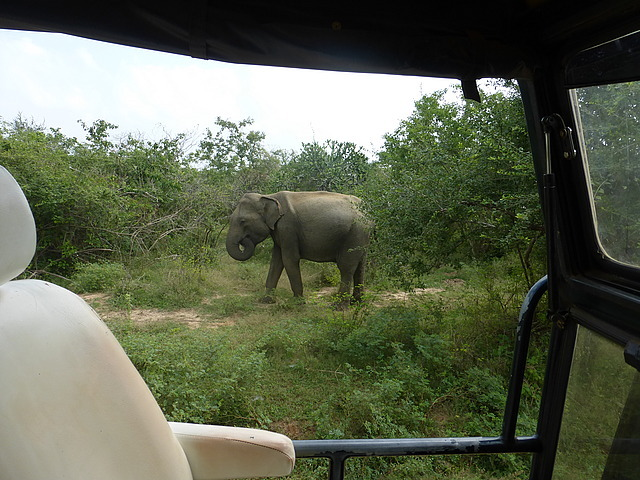 First encounter with elephants 2