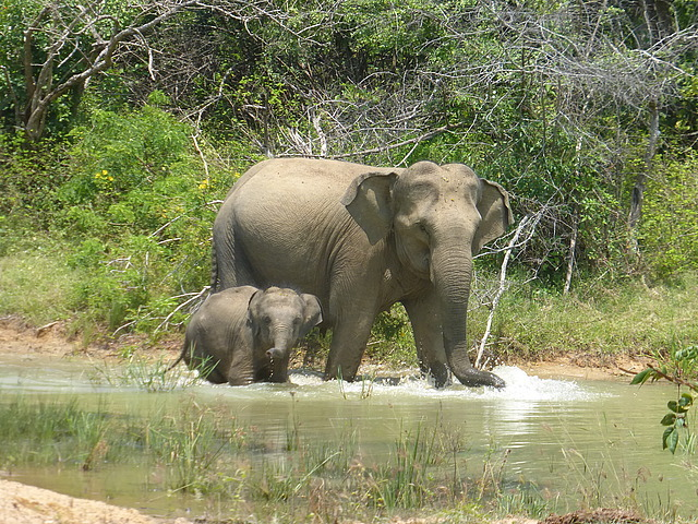 Elephants at waterhole - 3