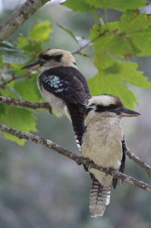 RN Park - Audley - Kookaburras