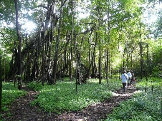 Mamiraua - Walk 4