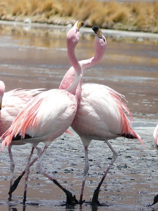 Lagunas   Flamingos 4