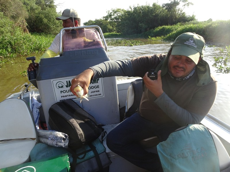 Pantanal Extreme Tour - Day 3 - Fish that jumped in boat!