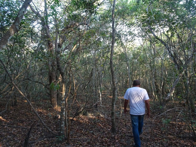 Walk in the forest with Luiz